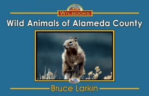 Wild Animals of Alameda County