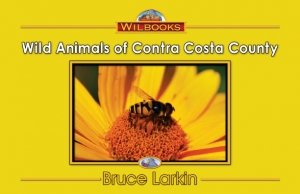 Wild Animals of Contra Costa County