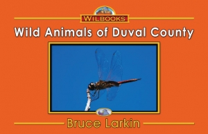 Wild Animals of Duval County