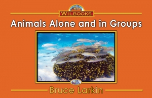 Animals Alone and in Groups