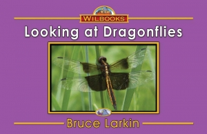 Looking at Dragonflies
