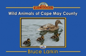 Wild Animals of Cape May County