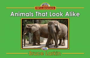 Animals That Look Alike
