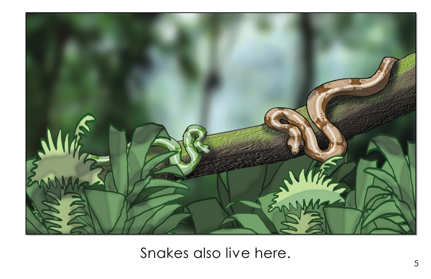 Animals in a Tropical Rainforest (First Grade Book) - Wilbooks