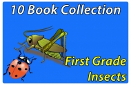 First Grade Insects Collection