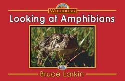 Looking at Amphibians