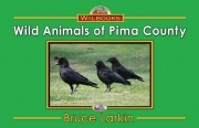 Wild Animals of Pima County