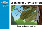Looking at Gray Squirrels