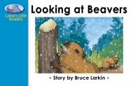 Looking at Beavers