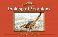 Looking at Scorpions