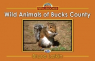Wild Animals of Bucks County