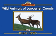 Wild Animals of Lancaster County