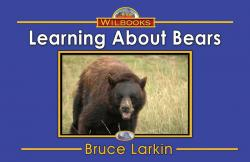 Learning About Bears