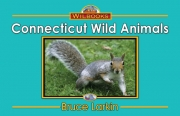 Connecticut Wild Animals