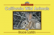 California Wild Animals