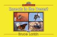Insects in the Desert (Photo)