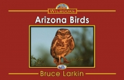 Arizona Birds