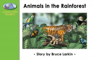Animals in the Rainforest