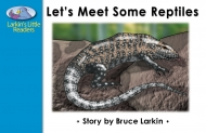 Let's Meet Some Reptiles