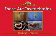 These Are Invertebrates