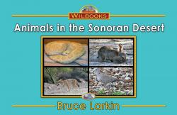 Animals in the Sonoran Desert