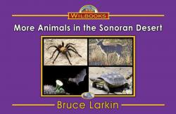 More Animals in the Sonoran Desert