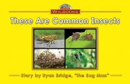 These Are Common Insects